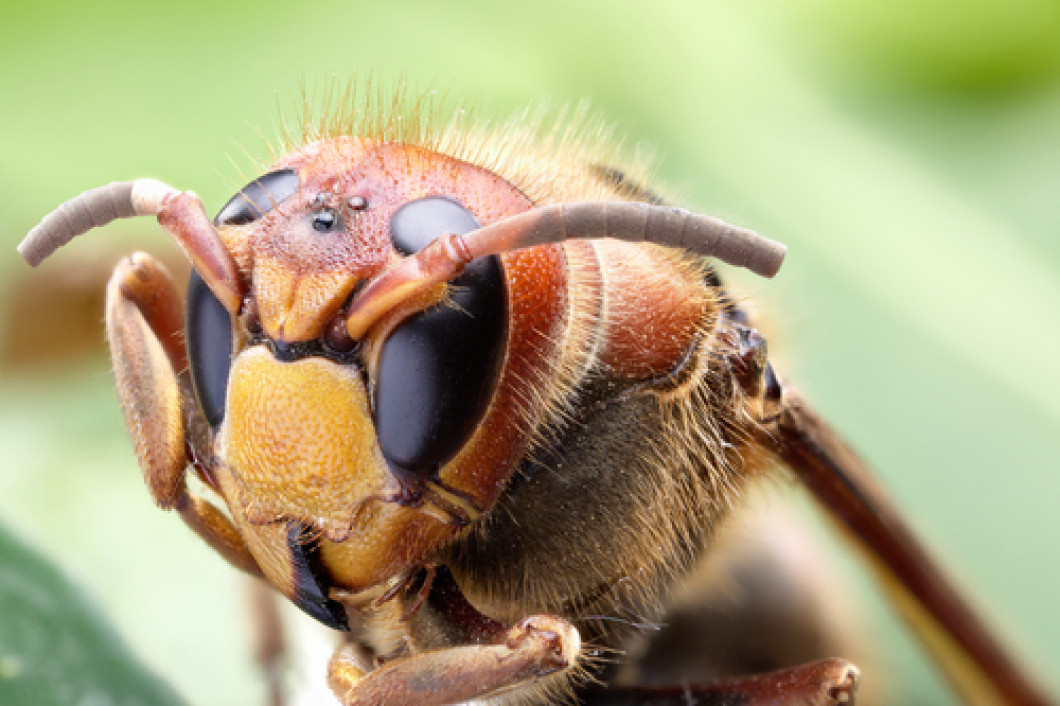 Hire a hornet control professional in Lowell, MA